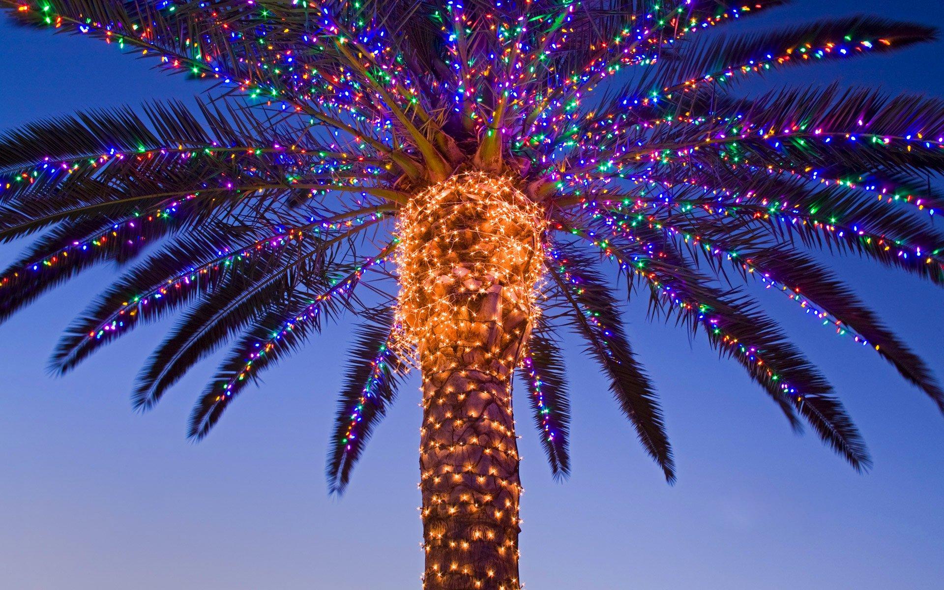 Под небом голубым..., или Экзотический Новый год