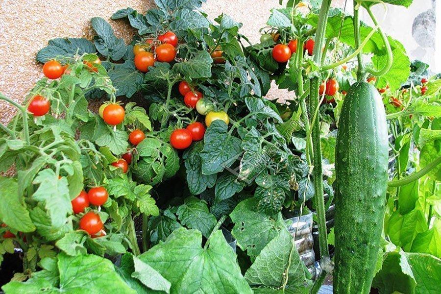 Календарь садовода огородника на 2022 год - даты посева и посадки растений