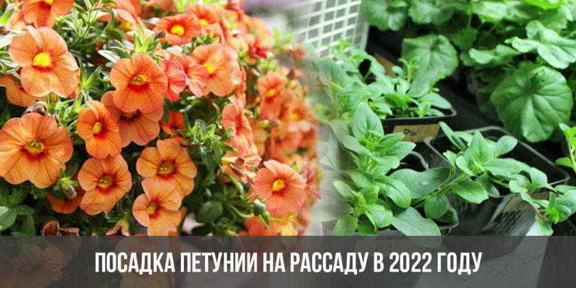 Посадка петунии на рассаду в 2022 году