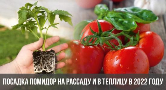Посадка помидор на рассаду и в теплицу в 2022 году